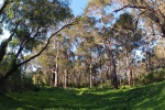 Karri forest views