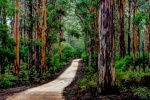 Magnificent Boranup Forest