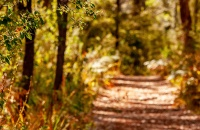 heritage-trail-lodge-margaret-river-forest-walks-header.jpg
