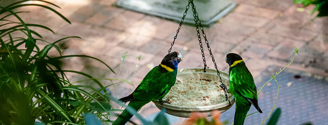heritage-trail-lodge-margaret-river-header-birds-1.jpg